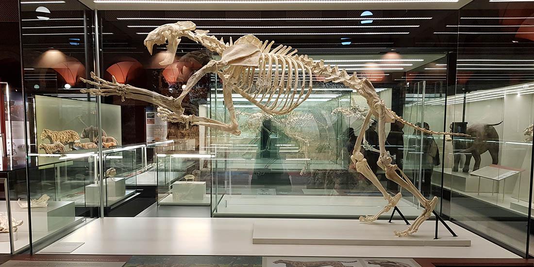 Resultado de imagen de Museo Arqueológico Regional de la Comunidad de Madrid