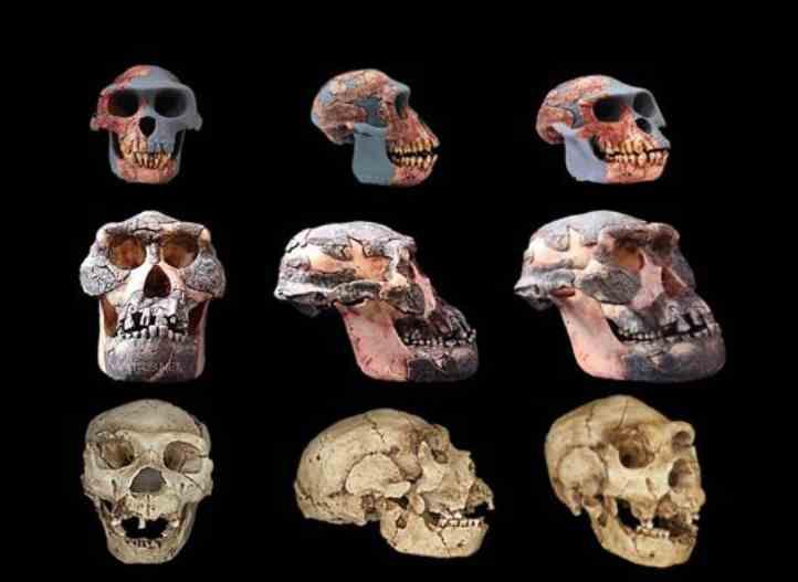 Imagen del evento I Curso de Introducción a la Paleontología Humana